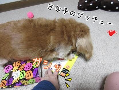 kinako6047.jpg