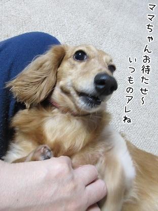 kinako6053.jpg