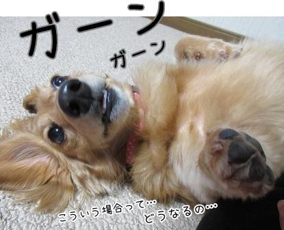 kinako6057.jpg