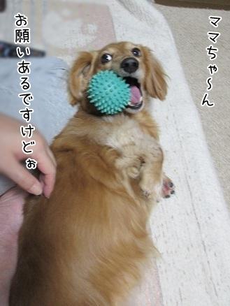 kinako6067.jpg