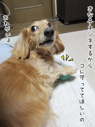kinako6068.jpg