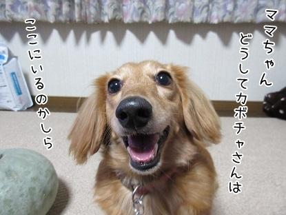 kinako6074.jpg