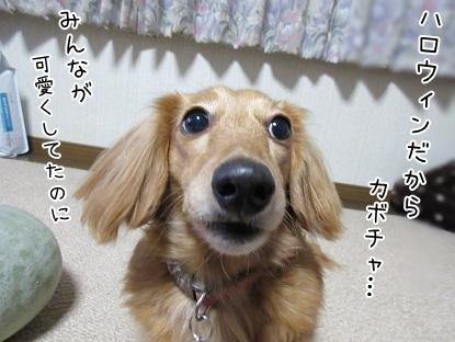 kinako6075.jpg