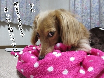 kinako6096.jpg