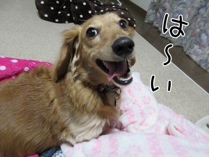 kinako6105.jpg