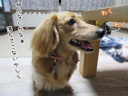 kinako6111.jpg