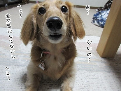 kinako6112.jpg