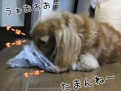 kinako6116.jpg