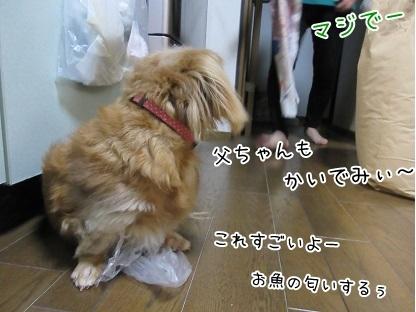 kinako6117.jpg