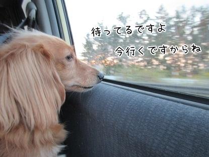 kinako6119.jpg