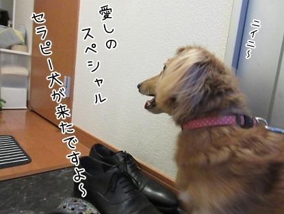 kinako6123.jpg
