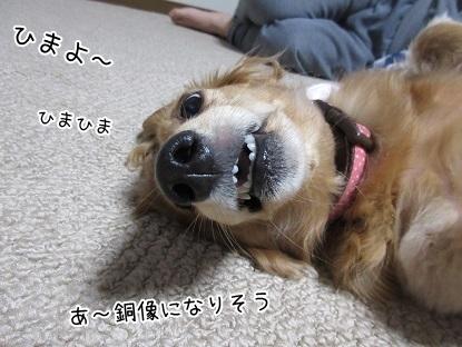 kinako6125.jpg