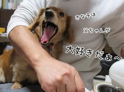 kinako6133.jpg