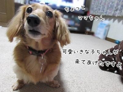 kinako6134.jpg