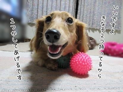 kinako6137.jpg