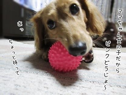 kinako6138.jpg