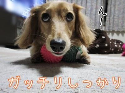 kinako6140.jpg