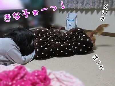kinako6145.jpg