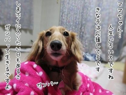 kinako6147.jpg