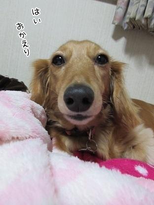 kinako6149.jpg