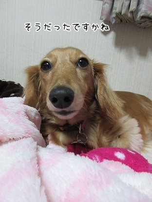 kinako6151.jpg