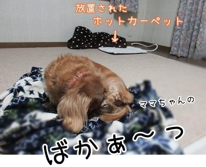 kinako6161.jpg