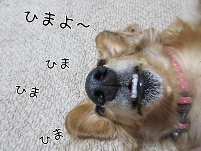 kinako6162.jpg
