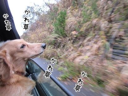 kinako6164.jpg