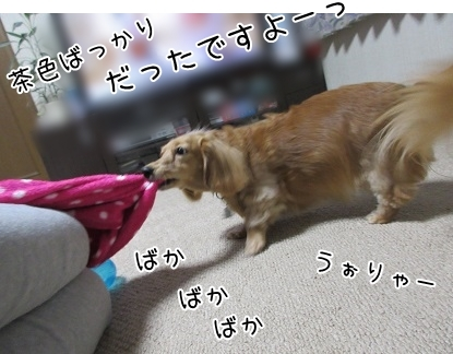 kinako6166.jpg