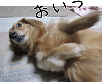 kinako6173.jpg