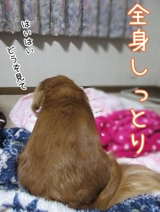 kinako6181.jpg