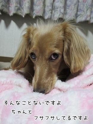 kinako6182.jpg