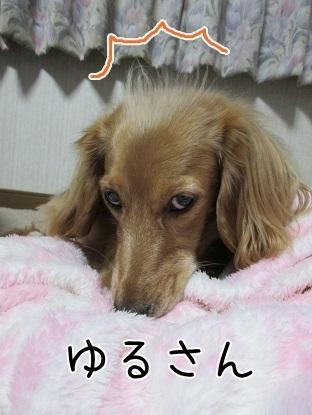 kinako6183.jpg