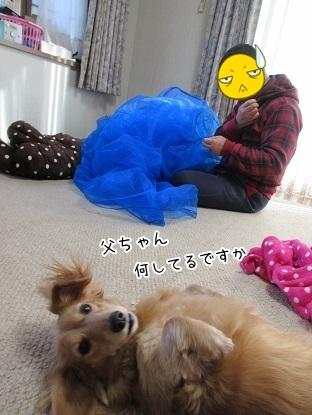 kinako6204.jpg