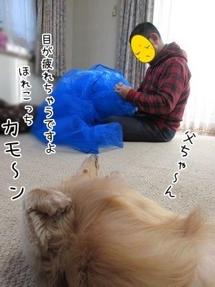 kinako6206.jpg