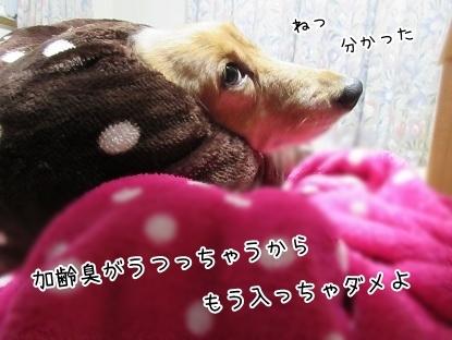 kinako6220.jpg