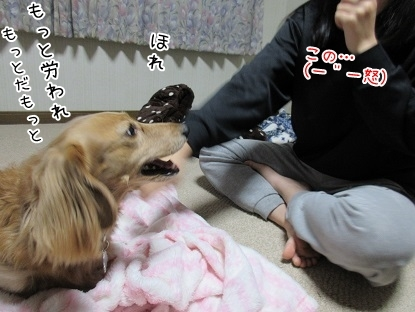 kinako6225.jpg