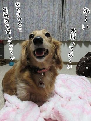 kinako6226.jpg