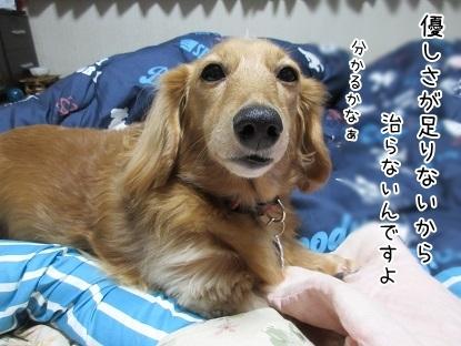 kinako6228.jpg