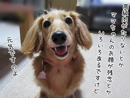 kinako6234.jpg