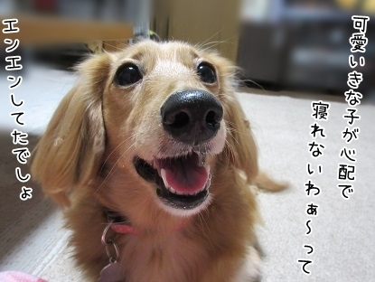 kinako6236.jpg