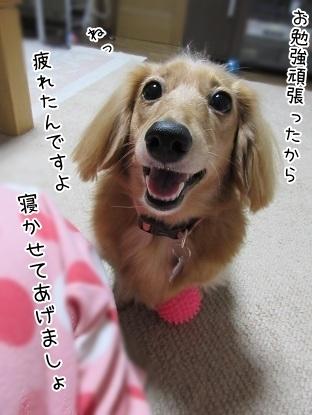 kinako6241.jpg
