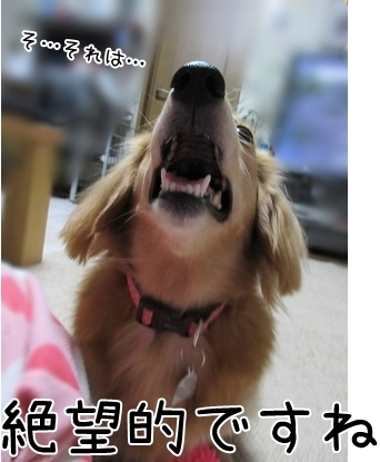 kinako6244.jpg