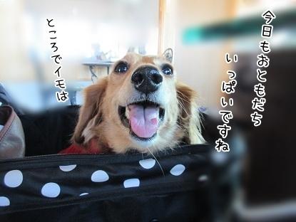 kinako6246.jpg