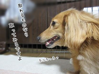 kinako6253.jpg
