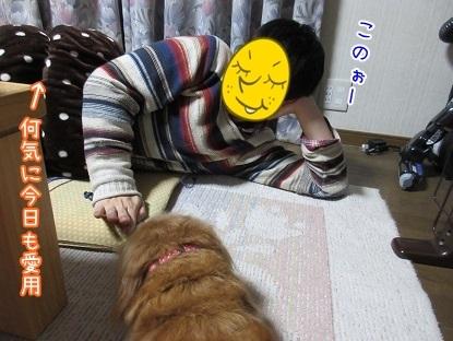 kinako6254.jpg