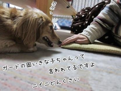 kinako6256.jpg