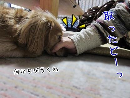 kinako6257.jpg
