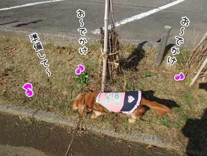 kinako6259.jpg