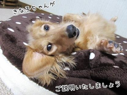 kinako6268.jpg